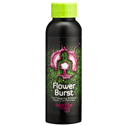 Buddhas Tree Flower Burst 100ml