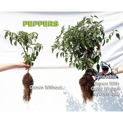 Pepper plant with and without great white