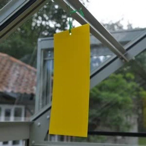how to make yellow sticky traps